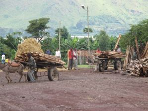 Wood Market in Ethiopia