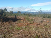 2017-10-10_Evans_6_A large part of the forest that has been felled
