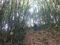 Tropical Forestry Tharandt_Bamboo forest in Quy Chau District, Nghe An Province
