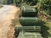 Tropical Forestry Tharandt_Bamboo fresh raw material