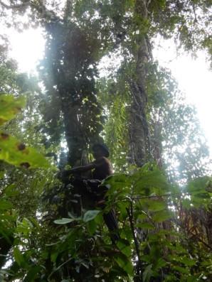 Forest gathering (© Astutik)